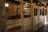 pic of stable horse  - Interior photograph of newly built horse stable - JPG