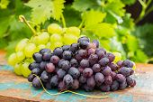 Healthy Fruits Red And White Wine Grapes In The Vineyard, Dark Grapes/ Blue Grapes/wine Grapes,  Bun poster