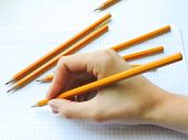 School Pencils On White Background.back To School.color Pencils Isolated On White Background.close U poster