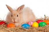 Adorable rabbit and Easter eggs on white background