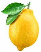 Ripe lemon fruit with lemon leaf on white background. File contains clipping path. poster