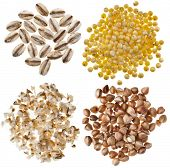 Different kinds group grains : pearl barley, millet, wheat semolina,  buckwheat ,  isolated on white
