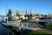 Shrimp And Fishing Fleet At Dock