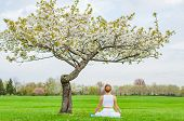 Beautiful Young Woman Is Practicing Yoga Or Meditating Sitting In Lotus Pose Near Blossom Tree At Th poster
