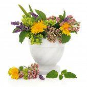 Lavendel, Valeriaan, dames mantel en paardebloem bloem hoofden met Aloë vera en Citroenmelisse bladeren in