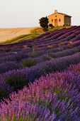 stock photo of plateau  - chapel with lavender and grain fields - JPG