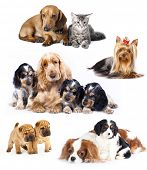 Gruppe von Katzen und Hunden in front of white background