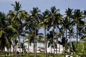 Palm And Coastline In  Zanzibar