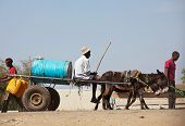 SUDAN - JANUARY 12: Sudanese peasant rides water carrier to the source near Khartoum on January 12,