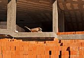 Wheelbarrow On 1St Floor On Building Under Construction