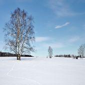 Frozen Trees In Field