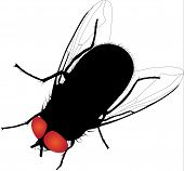 House fly vector silhouette. Fully editable