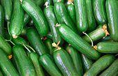 Organic Fresh Cucumbers