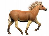 Quagga Extinct Animal