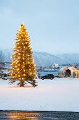 stock photo of tromso  - Snow covered outdoor Christmas tree with lights in Tromso Norway - JPG