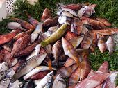 A varied display of fresh fish