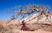 Flamenco And A Dead Tree