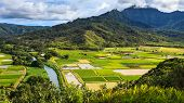 stock photo of house woods  - Taro fields in beautiful Hanalei Valley Kauai - JPG