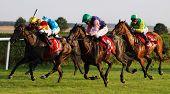 Horse Race 01