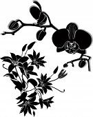 orchid flowers vector clematis