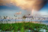 Sea oats growing on beach with rainbow and clouds in background at sunrise