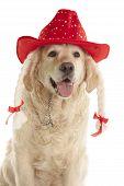 Golden Retriever In Red Hat