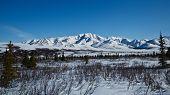 pic of denali national park  - Landscape view of Alaska - JPG