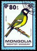 Vintage  Postage Stamp. Titmouse..