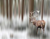 Artistic image of a deer in winter landscape