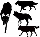 wolves animals vector isolated