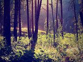 a forest with the sun shining through done with a retro vintage instagram filter