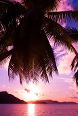 Summer Island Tree