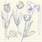 Notebook Set With Tulip And Amaryllis