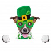 stock photo of crazy face  - st patricks day dog behind blank banner - JPG