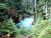 stock photo of mckenzie  - Beautiful shot of the Mckenzie River Gorge in Oregon - JPG