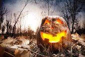 Halloween Pumpkin In The Forest