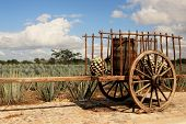 stock photo of ox wagon  - Old traditional mexican trailer in front of blue agave plantation - JPG
