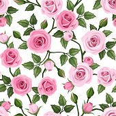 pattern with pink roses. Vector illustration.