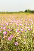 Beautiful flowers in field