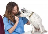 Veterinary With A Dog For A Review poster