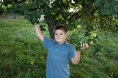 Portrait Of A Boy On A Background Of Green Apples With Apples