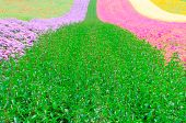 Flower Field Garden