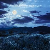 High Wild Plants In  Mountains In Moon Light