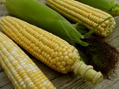 image of corn-silk  - fresh harvested corn cobs - JPG