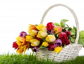 Basket Of  Tulips Isolated On White Background.  Bouquet Of Tulips In A Basket