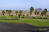 campo de golfe com palmeira