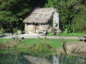 Old Maori Hut