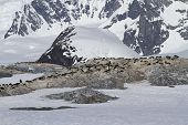 Several Colonies Of Adelie Penguins On The Antarctic Island On A Background Of Mountains