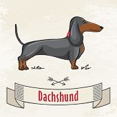 foto of dachshund dog  - Dachshund Hunting Cute Dog - JPG
