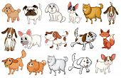 Illustration of the different breeds of dogs on a white background